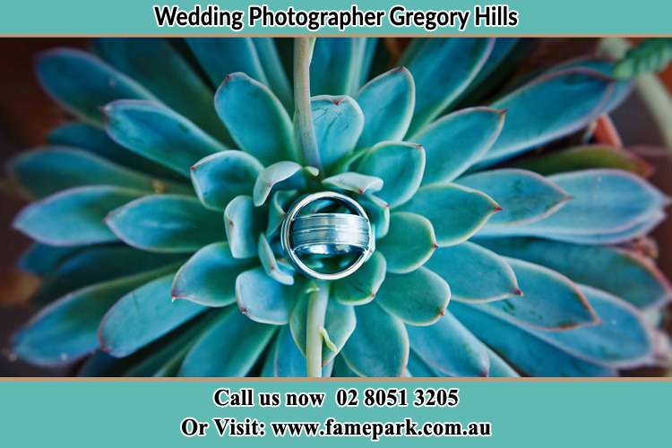 Photo of the wedding ring design at the top of the plant Gregory Hills NSW 2557
